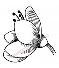 Tampon Collection Fleurs - Fleur B