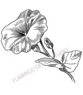 Tampon Collection Fleurs - Fleur D Liseron