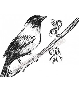 Rubber stamp - Bird Sketch