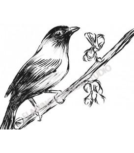 Tampon - Oiseau sur une branche crayon