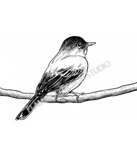 Rubber stamp - Bird Sketch 2